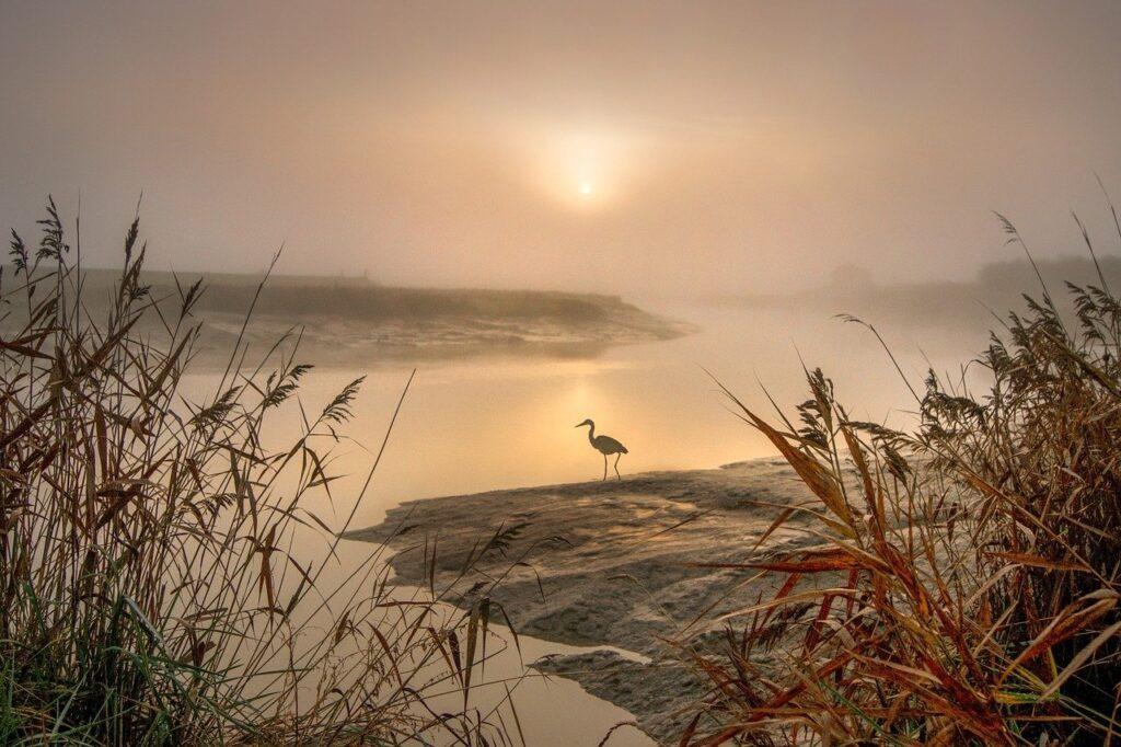 heron, egret, landscape