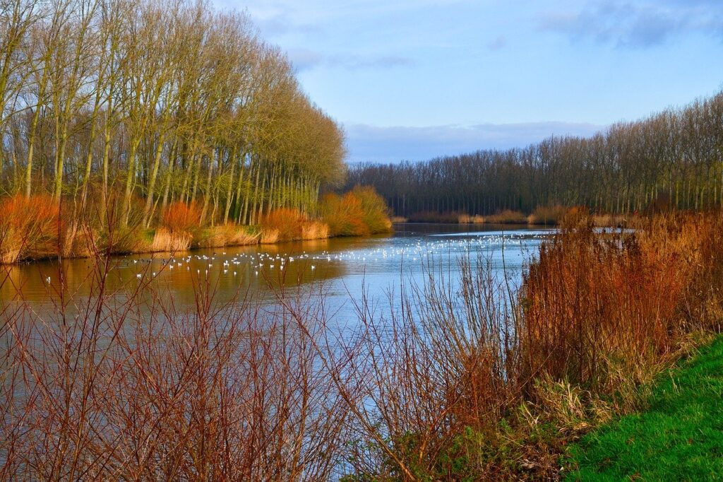river, trees, fall