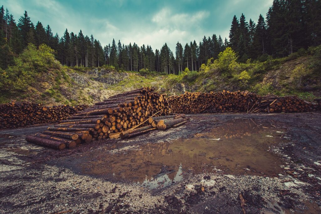 forestry, logging, forest