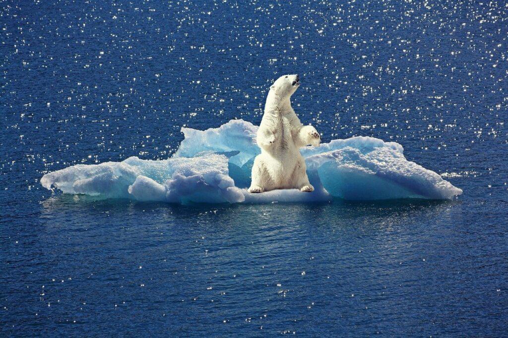 polar bear, iceberg, ice floe
